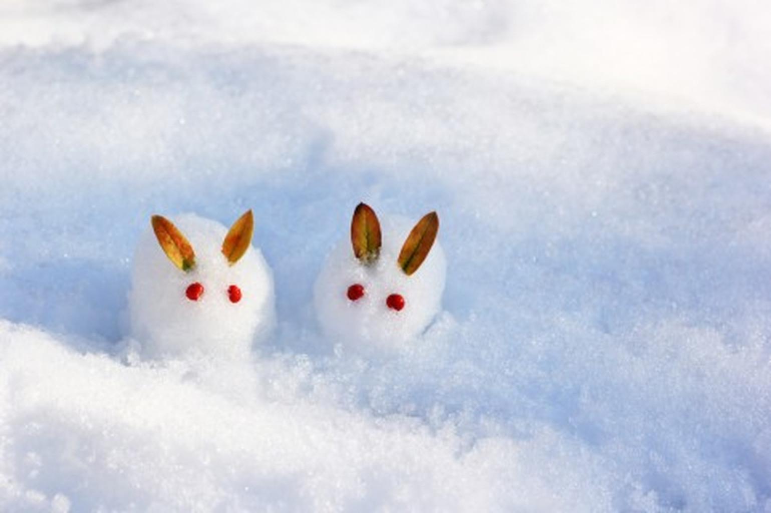 Snowrabbit